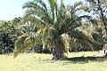Araguainha - State of Mato Grosso, Brazil - panoramio (1075).jpg