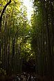 Arashiyama (8741758488).jpg