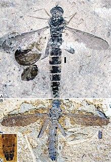 Archisargidae