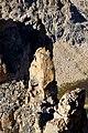 Argentina - Frey climbing 67 - Dave climbing on El Abuelo (6816082444).jpg