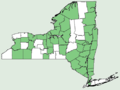 Asarum canadense NY-dist-map.png