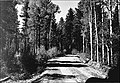 Aspen reproduction - Kaibab NF - 1946.jpg