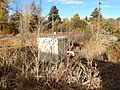 Atriplex patula - spear saltbush and Chenopodium berlandieri - pitseed goosefoot - Flickr - Matt Lavin (1).jpg