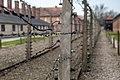 Auschwitz - panoramio (7).jpg
