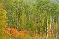 Autumn, Thunder Bay (1431519527).jpg