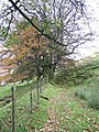 Autumn Trees - geograph.org.uk - 1028184.jpg