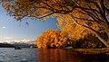 Autumn at Lake Tekapo NZ (20) (8670112943).jpg