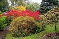 Autumn colours - geograph.org.uk - 1017312.jpg