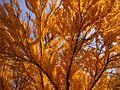 Autumn in M.M. Gryshko National Botanic Garden (Ukraine).jpg