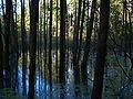 Auwald Überschwemmung.JPG