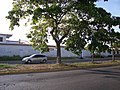 Avenida Gran Mariscal - panoramio (5).jpg