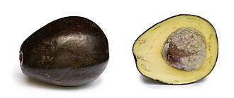 Persea - Image: Avocado with cross section edit