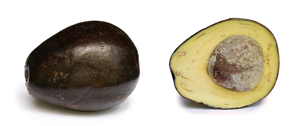 Avocado with cross section edit