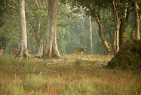 Image illustrative de l'article Parc national de Kanha