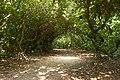 Baarn, in park bij Kasteel Groeneveld IMG 0555 2019-07-24 16.06.jpg