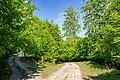 Bad Driburg - 2018-05-01 - NSG Hinnenburger Forst (05).jpg