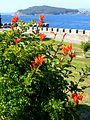 Baiona - Fortaleza de Monterreal 24.JPG
