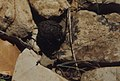 Ball of dung beetle dropped into crevice. Imouzzer (37724263762).jpg