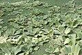 Bambouseraie de Prafrance 20100904 098.jpg