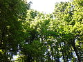 Banjička šuma 003.jpg