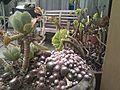 Baobao's garden (6734111875).jpg