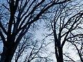 Bare Trees 2.jpg
