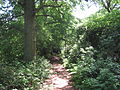Barnet Gate Wood path.JPG