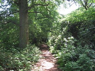 Barnet Gate Wood - Path in Barnet Gate Wood