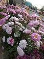 Beautiful Flower In My Garden 2.jpg