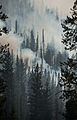 Beaver Creek Fire scene 20130820-FS-LSC-1272 (9588338566).jpg