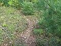 Beaver trail.jpg