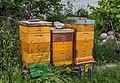 Bee hives, Maulavern Kellergasse, Zellerndorf, Lower Austria-6957.jpg