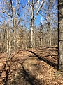 Beech Hollow Trail Enid Lake 2.jpg