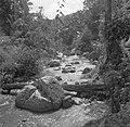 Beek in het oerwoud op Malakka, Bestanddeelnr 254-5377.jpg
