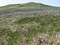 Below Low Corby Knowe - geograph.org.uk - 835309.jpg