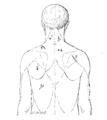 Bertillon - Identification anthropométrique (1893) 363 n&b.png
