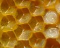 Bienenwabe mit Eiern und Brut 5 egg.png