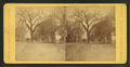 Big tree, Boston St, from Robert N. Dennis collection of stereoscopic views.png