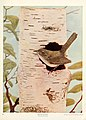 Birds and nature in natural colors (Plate 19) (6233792127).jpg