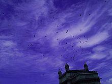 Birds over Gateway of India.jpg