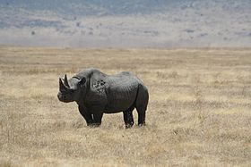 Black rhino Ngorongoro Crater.jpg