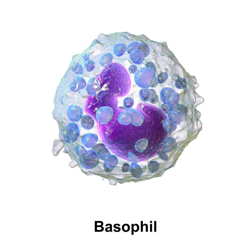 Figura 3D de un basófilo