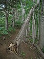 Bloomfield Provincial Park IMG 8281 (1849061636).jpg