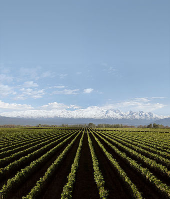 Argentine agriculture is relatively capital intensive, today providing about 7% of all employment. Bodega chakana hacia la montana.jpg