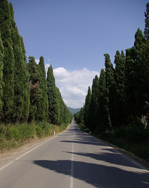 Bolgheri Viale dei Cipressi 001