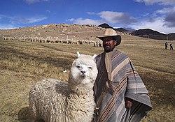 A Bolivian man and his alpaca