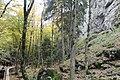 Borjomi Kharagauli National Park (7).jpg
