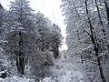 Borkowo zimą - panoramio.jpg