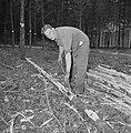 Bosbewerking, arbeiders, boomstammen, gereedschappen, Bestanddeelnr 251-9139.jpg