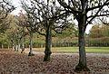 Boskett Schlosspark Schleissheim-1.jpg